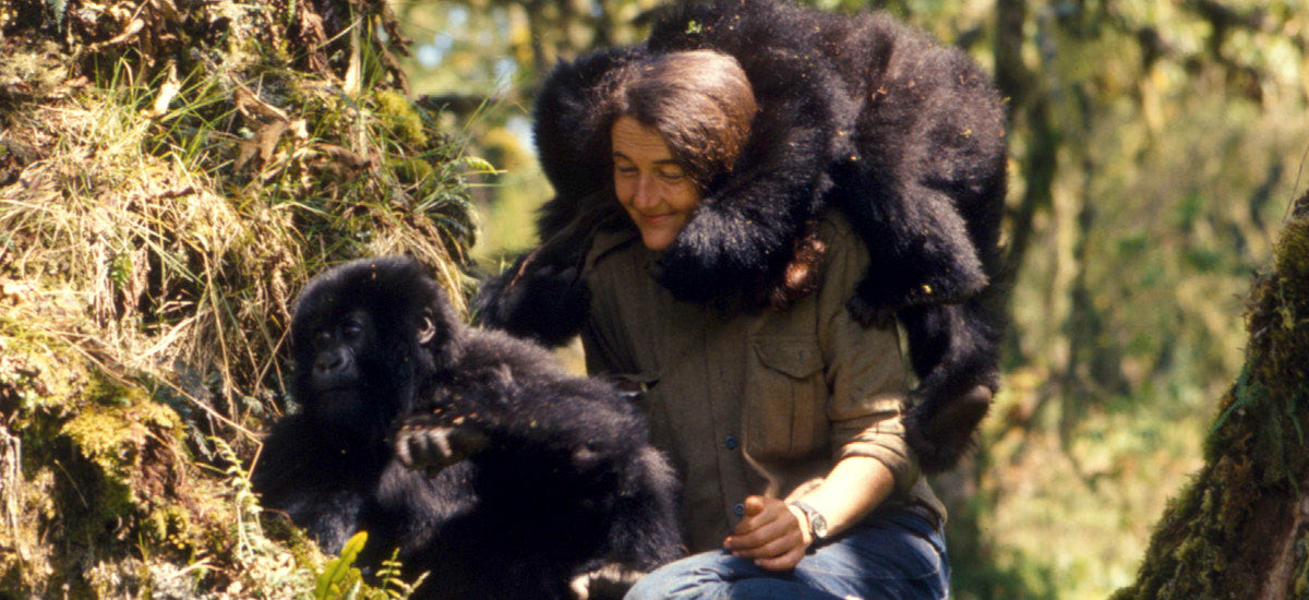 Gorillaorg Dian Mobile The Gorilla Organization