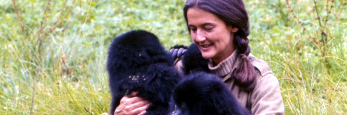 Dian fossey lived with the gorillas for thirteen years