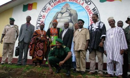 kagwene_gorilla_sanctuary
